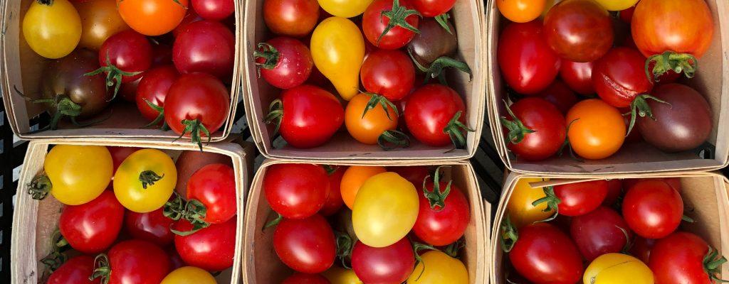 Tomate-petits-fruits-04